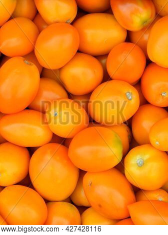 Ripe Tomatoes Of The New Harvest