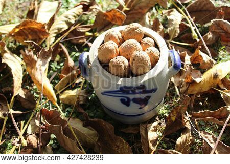 Walnuts In A Pot And Walnut Leaves In The Autumn