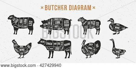 Butcher Diagram, Scheme Set. Mutton, Lamb, Pork, Duck, Chicken, Turkey, Goose Meat Cuts. Cuts Of Mea