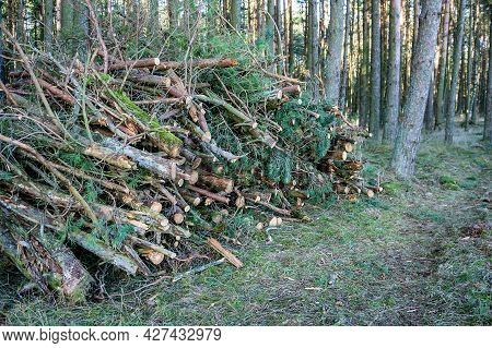 Cutting Down Trees. Logging. Trunks Of Felled Trees. Deforestation.
