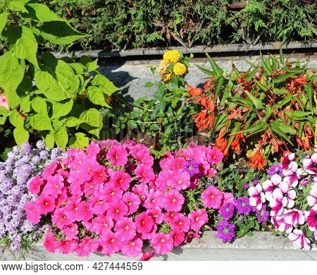 Flowerbed With Many Blooming Flowers In Spring To Decorate The Streets Of The City