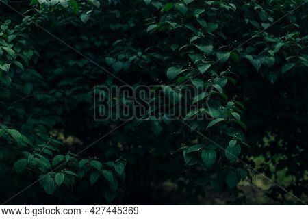 Dark Leaves Moody Photography Style Of Nature Background Concept Floral Garden Environment