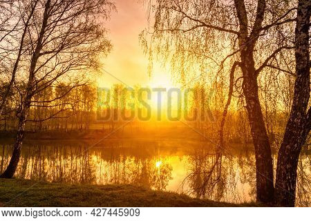 Sunrise Near A Pond With Birches On The Shore On A Spring Morning. Sun Rays Breaking Through Trees.