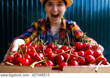 A Young Woman In A Hat And Shirt Smiles And Shows A Basket Of Cherries And Sweet Cherries. Summer Fo