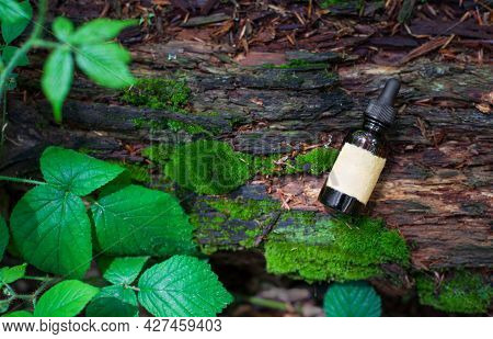 Amber Glass Cosmetic Bottle On Green Background, Natural Moss.