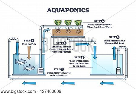 Aquaponics Food Production With Hydroponics Plants And Fishes Outline Diagram. Environmental And Nat
