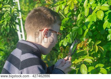 A Teenage Boy Explores The World Of Plants And Insects With A Magnifying Glass.