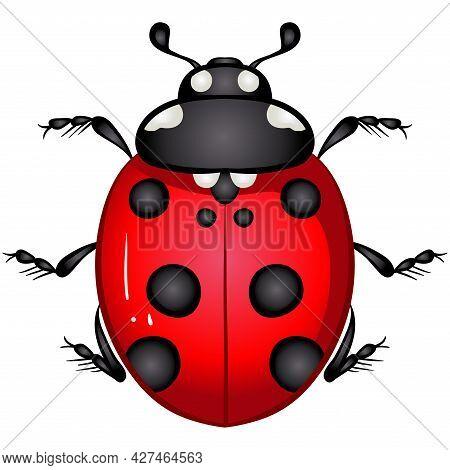 Vector Illustration With Insect Beetle. Set Isolated On White Background. Ladybird, Ladybug Beetle