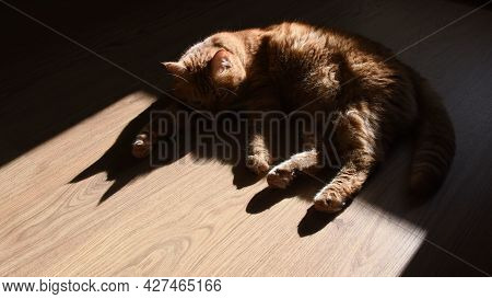 Red Tabby Cat Trying To Nap On Wooden Floor In Bright Sunlight With Black Shadows. Furry Ginger Cat