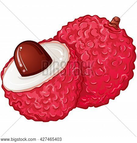 Tropical Lychee Fruit Half And Whole. Bright Colorful Hand Drawn Vector Illustration Isolated On Whi