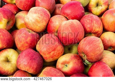 Lots Of Red Apples. Background Or Texture From Apples. Red Ripe Apples. Close-up. Collection And Sal