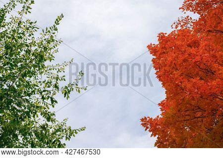 Autumn Versus Summer Concept. Trees With Leaves Changing Colors In Fall. Change Of Seasons