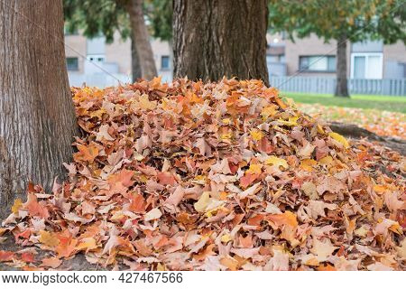A Pile Of Autumn Fallen Leaves On The Ground Near Trees In The Yard Near Houses.