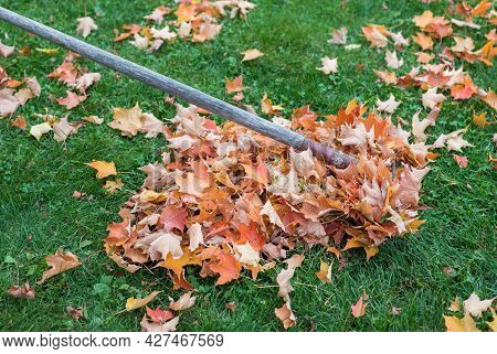 Raking Leaves In Fall In The Garden. Pile Of Fallen Leaves On The Grass