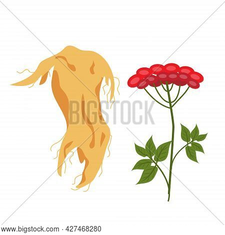 Ginseng Root And Ginseng Berry Icon Flat Style. Isolated On White Background. Vector Illustration