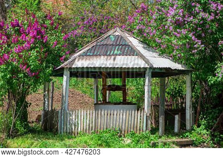 Well With A Gazebo . Blooming Trees With Water Well