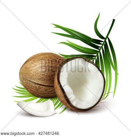Coconut Fresh Tropical Nut And Tree Leaves Vector. Whole And Crashed Vegetarian Natural Ripe Coconut