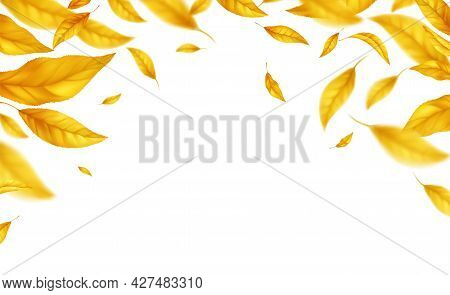 Falling Flying Autumn Leaves Background. Realistic Autumn Yellow Leaf Isolated On White Background.