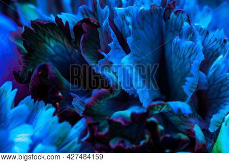 Abstract Floral Background, Blue Carnation Flower Petals. Macro Flowers Backdrop For Holiday Brand D