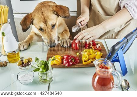 Teenager With Dog Is Preparing An Online, Virtual Master Class And Views A Digital Recipe On A Touch