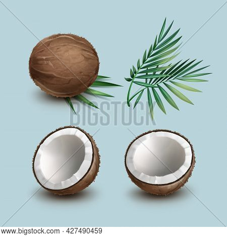 Vector Set Of Brown Whole And Half Cut Coconut With Green Palm Leaves Isolated On Background