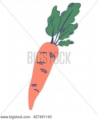 Fresh Carrot With Green Leaves. Vegetable. Health Food. Vector Illustration For Recipes, Restaurant,