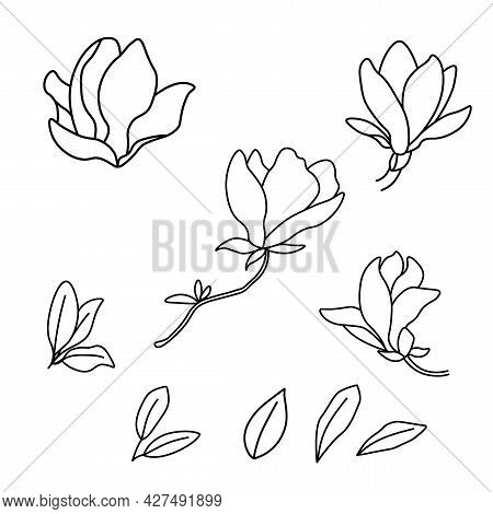 Black And White Line Illustration Of Magnolia Flowers On White Background. Vector Leaves And Buds Of