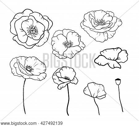 Black And White Line Illustration Of Poppies Flowers On A White Background. Vector Buds Of Poppy In