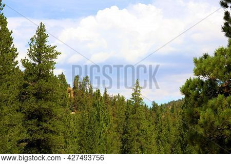 Thunderstorms Above A Lush Alpine Forest On A Mountain Plateau Taken In The Rural San Bernardino Mou