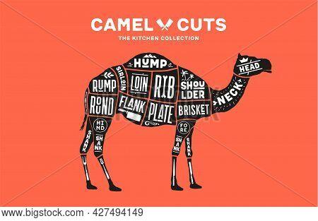 Camel, Dromedary. Scheme, Diagram, Chart Camel, Butcher Guide. Poster For Kicthen Or Bar Wall Design