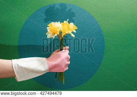 A Hand In A Rubber Glove Holds A Bouquet Of Daffodils. Copy Space. Green Background With Dark Circle