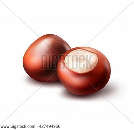 Vector Two Realistic Horse Chestnuts Close Up Side View Isolated On White Background
