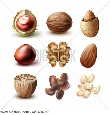 Vector Set Of Different Nuts Shelled, Unshelled Walnuts, Almonds, Chestnuts, Nutmeg And Cedar Top, S