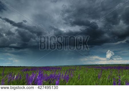 young wheaten green field and dark dramatic sky with stormy clouds, beautiful landscape before rain