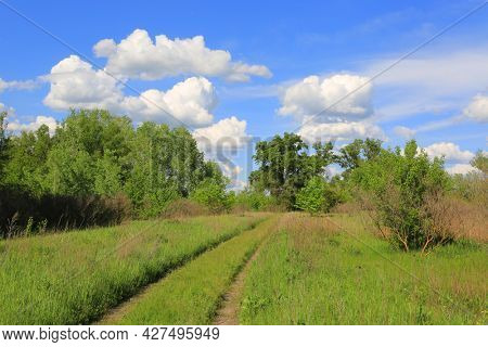 Landscape with path on green meadow in spring forest under clouds in blue sky