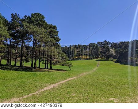People Walk In The Large Kislovodsk National Park. People Walk Along The Path Along The Forest On Th
