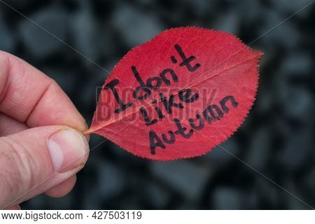 Leaf With Inscription Text - I Don't Like Autumn. Red Leaf In Hand On Blurred Gray Stone Background