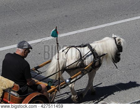 Turin, Italy - Circa July 2021: Man Driving White Pony Horse With Two Wheel Chariot