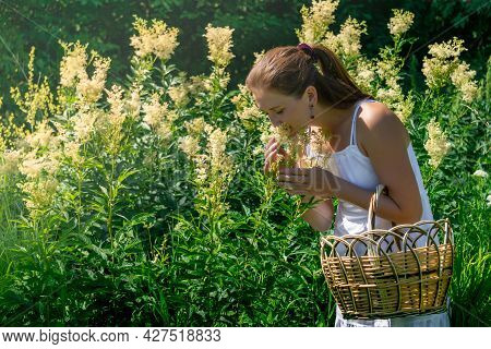 Young Woman Herbalist Inhales The Aroma Of Meadowsweet During Her Harvest In The Meadow