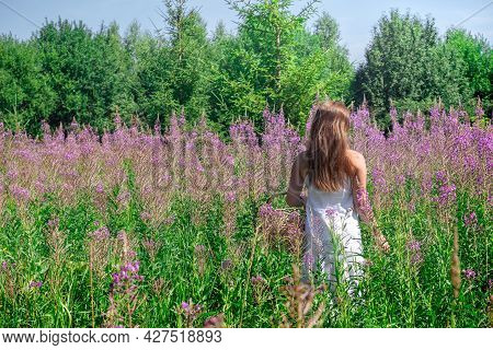 Young Woman Herbalist Gathers Fireweed In The Meadow