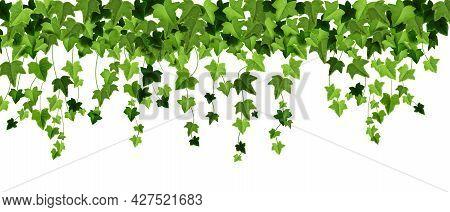 Green Ivy Plant Vector Border, Spring Climbing Vine Leaf Frame, Floral Creeper Liana Illustration On