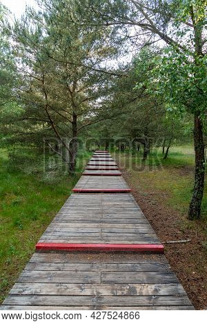 Wooden Flooring Along The Forest On A Summer Day.