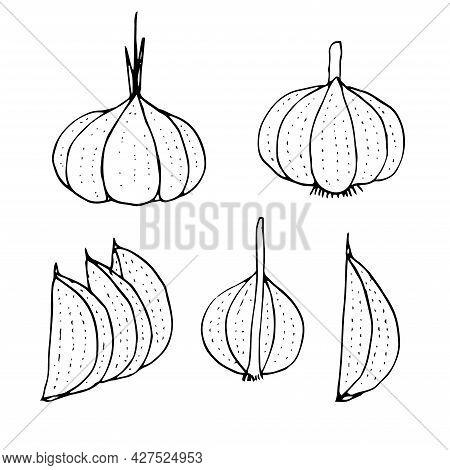 Set Of Garlic Vector Illustration Hand Drawing Doodle