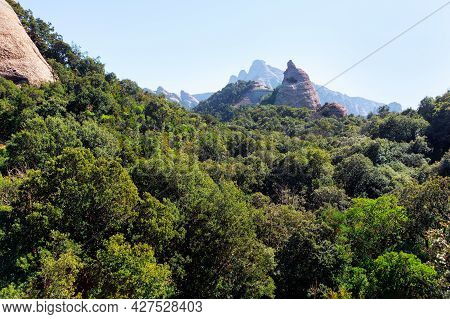 Dense Forest Growing On The Mountains . Green Woodland Of Montserrat Mountains In Catalunya