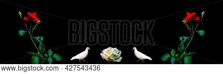 Red Roses And White Birds Doves On A Black Background. Two Birds Doves. Rose Flowers. Red And White