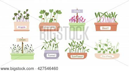 Micro Greens Sprouts Food Cartoon Set, Baby Microgreens