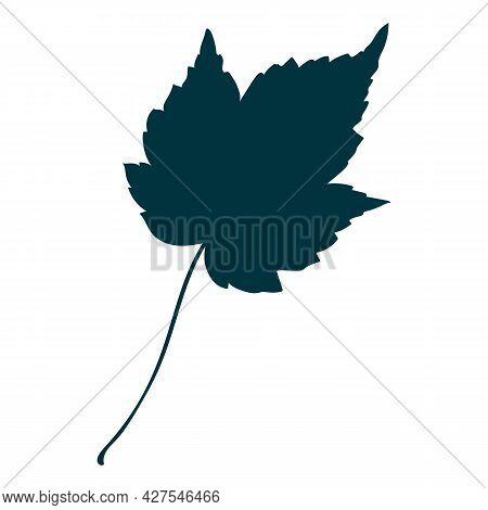 Autumn Maple Leafe Isolated On White Background