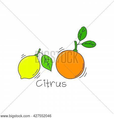 Orange And Lemon Fruit On White Background. Cartoon Sketch Graphic Design. Doodle Style With Black C