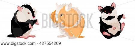 Three Realistic Hamsters On A White Background - Vector Illustration