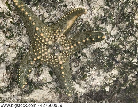 Top View Of A Starfish On White Sand And Sea Grass In Shallow Water. Zanzibar. Atlantic Ocean.